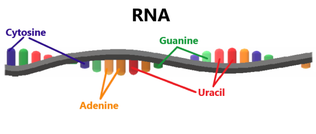 RNA Image Real